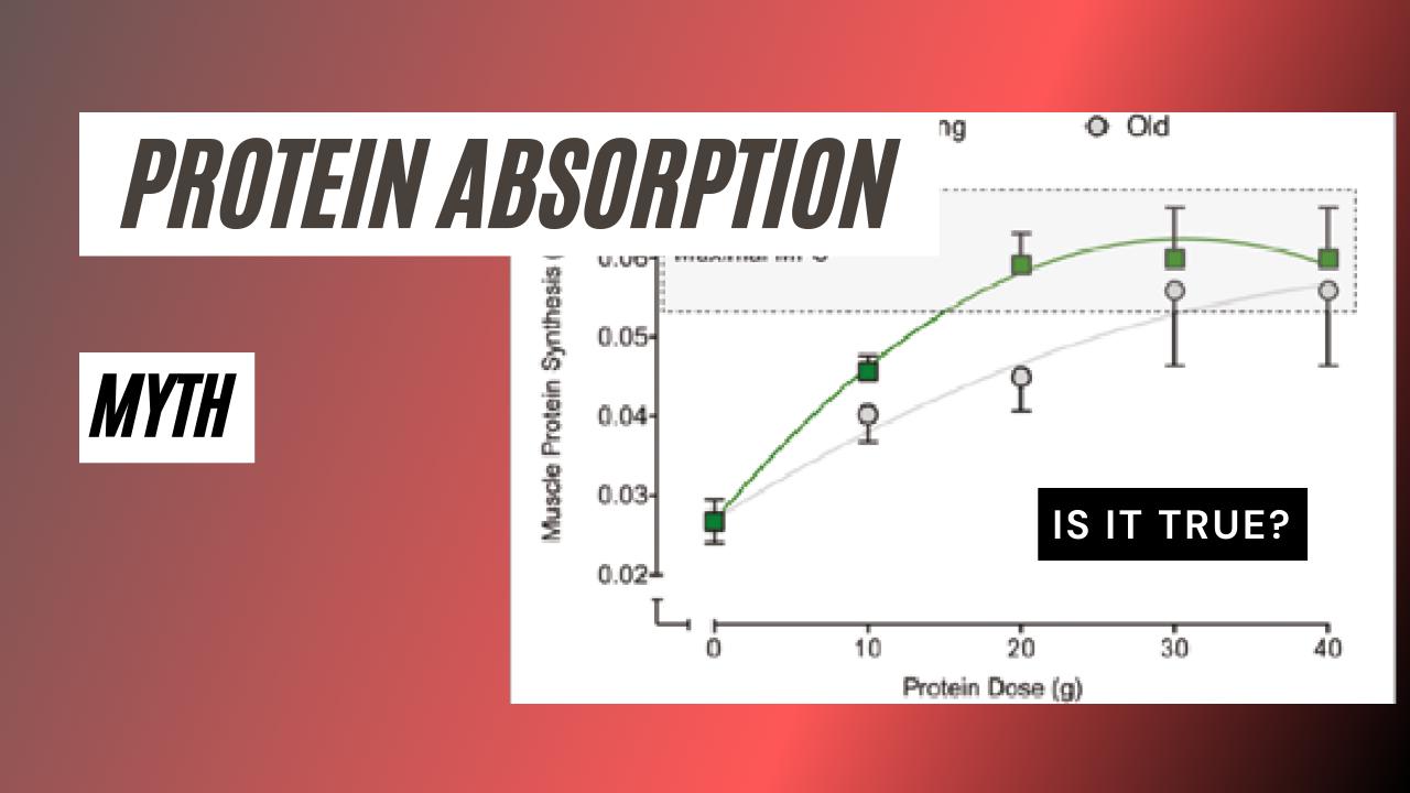 Protein Absorption Myth